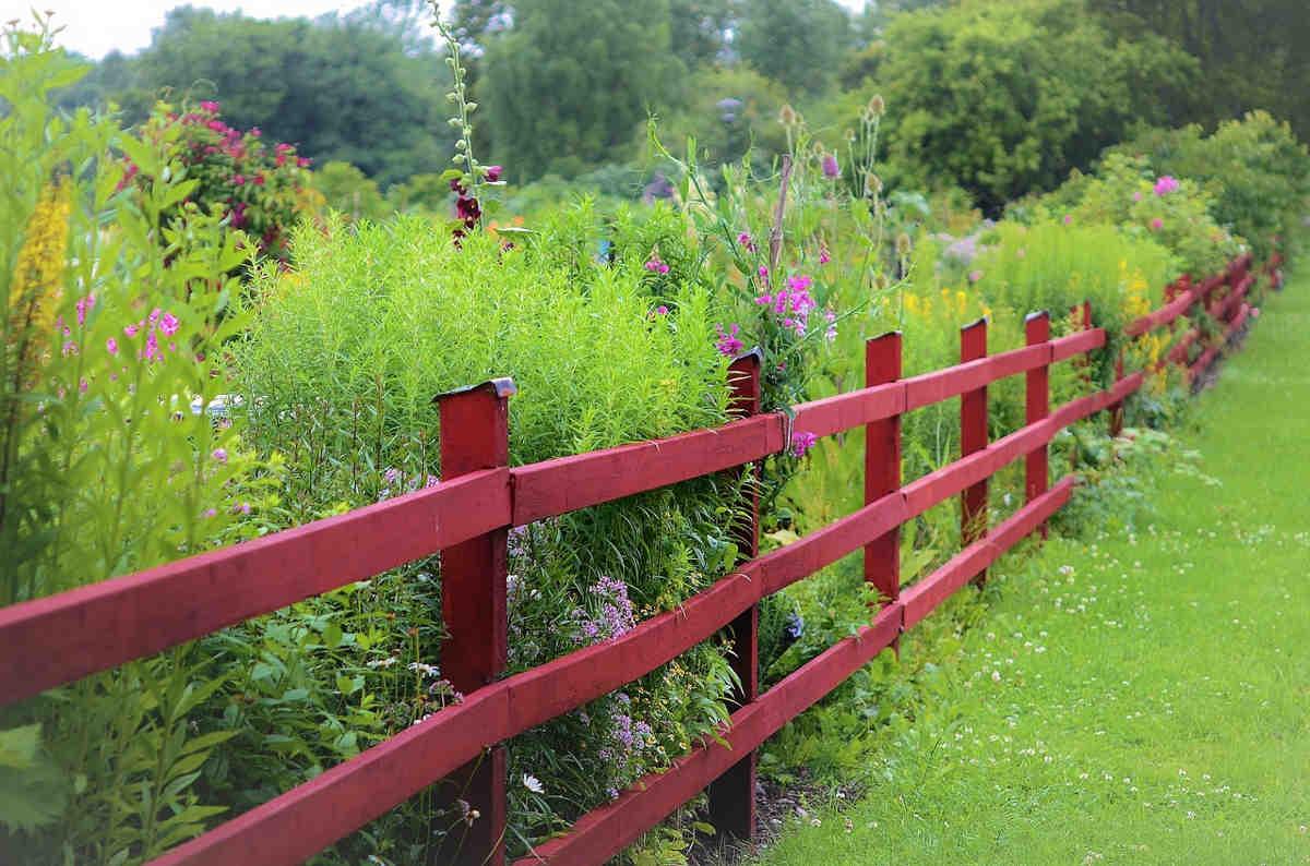 Jakie rośliny posadzić przy ogrodzeniu
