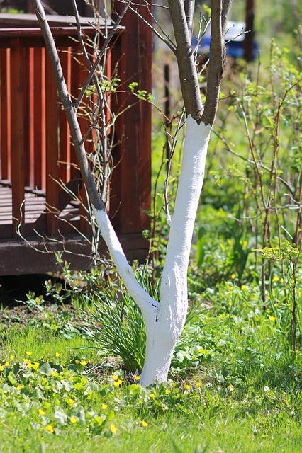 Bielenie drzew - co musisz wiedzieć?