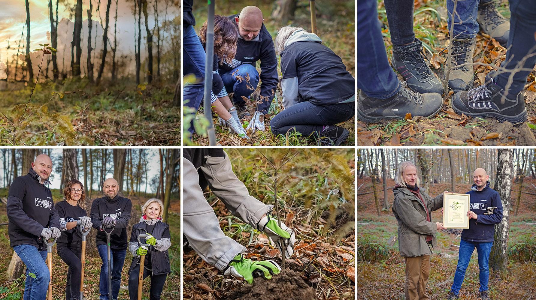 Las dla przyszłych pokoleń – CREATON Polska sadzi drzewa w okolicach Krakowa