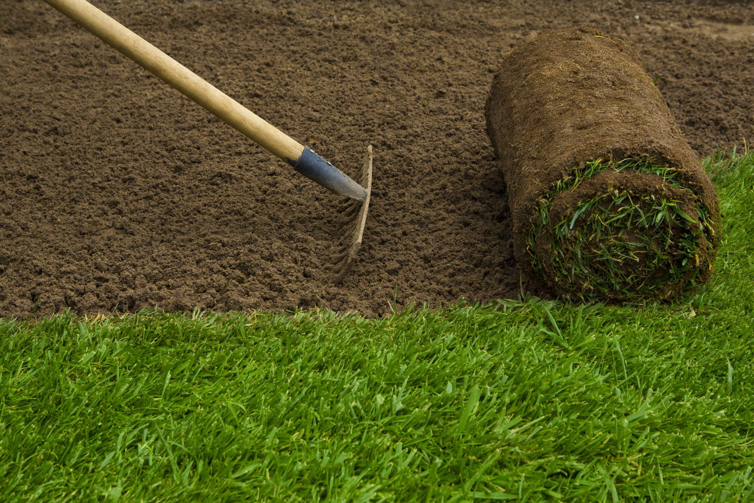 Trawnik z rolki czy siany? Czym kierować się podczas wyboru?