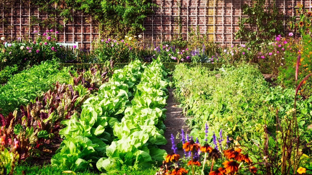 Perlit ogrodniczy w uprawie roślin. Jak wpływa na plony?